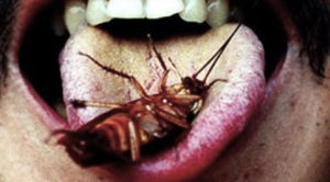 Stamp lick cockroach